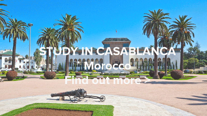 Study In Casablanca Web